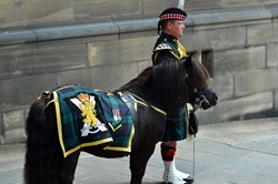 Corporal Mark Wilkinson, Shetland Pony Mascot Cruachan IV, Argyll and Sutherland Highlanders - Farewell Parade Stirling 2013